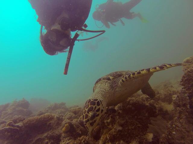 到深海潛水 人生必須做的事:沙巴密集式潛水課@中東空姐