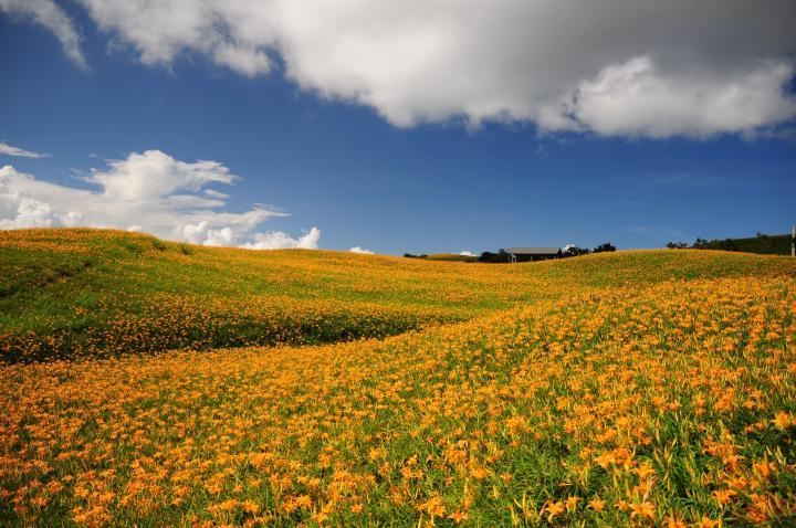 六十石山~金針花之美