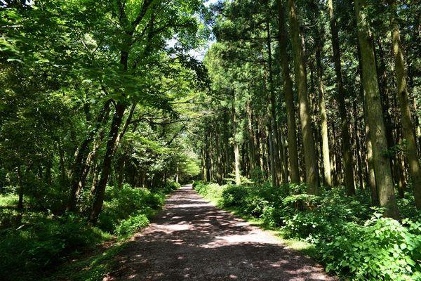 來去濟州島!歐洲莊園咖啡廳|秘密森林|拍照打卡熱門景點 ...